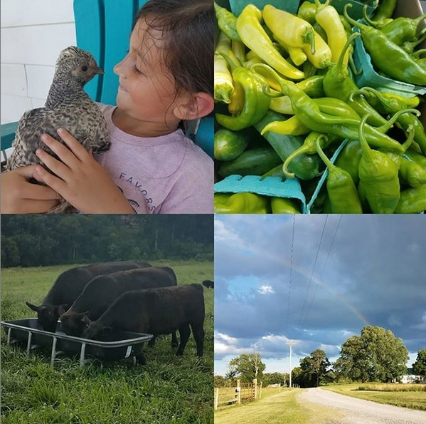 This Week on the Farm ….