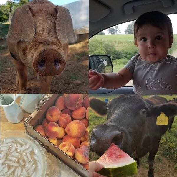 Weekly Farm Happenings and How To Get Kids To Try A New Food!