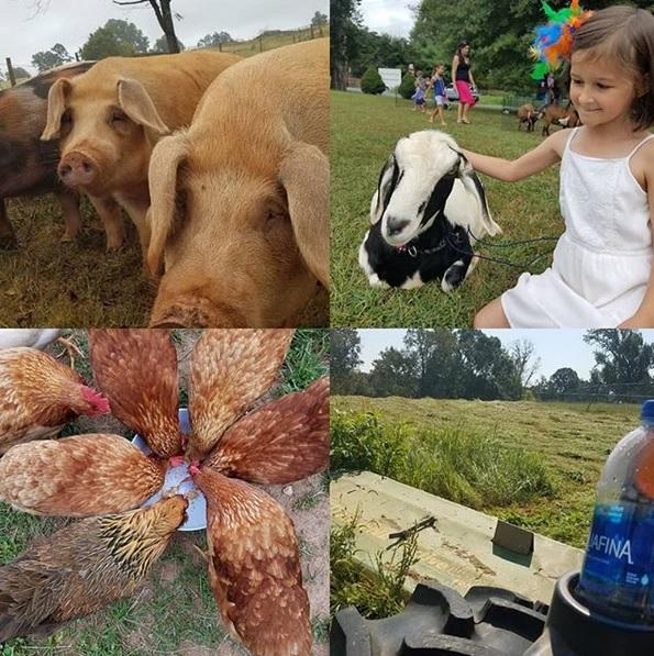 Round The Farm