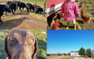 This Week 'Round The Farm – 02/16/2020