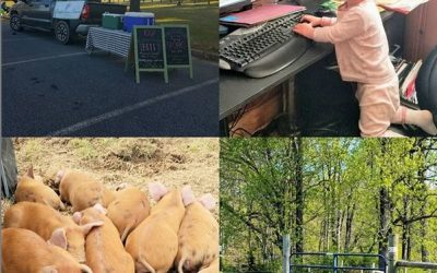 This Week 'Round The Farm – 04/14/2020