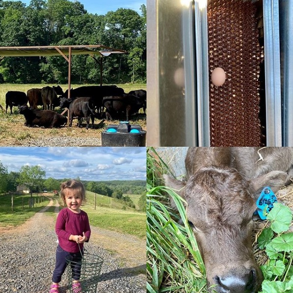 This Week 'Round The Farm – 06/21/2020