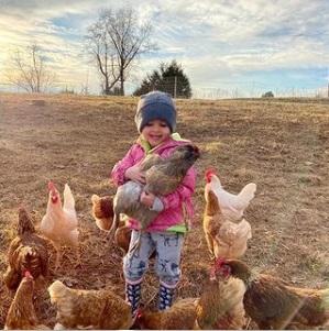 chicken wrangler