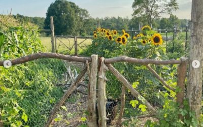 This Week 'Round The Farm – 08/08/2021